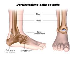articolazione caviglia